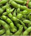 Soja (Vert), Graines Minigarden