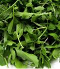 Roquette Cultivée, Graines Biologiques Minigarden