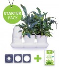 Starter Pack Minigarden Salades et Aromatiques